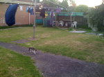 backyard05 plus Wiley