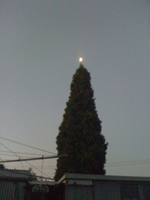 OurNaturalXmasTree